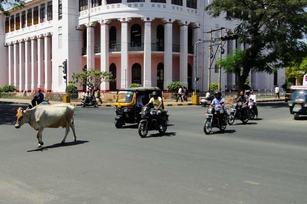 Indien Mumbai Kuh Verkehr Strasse