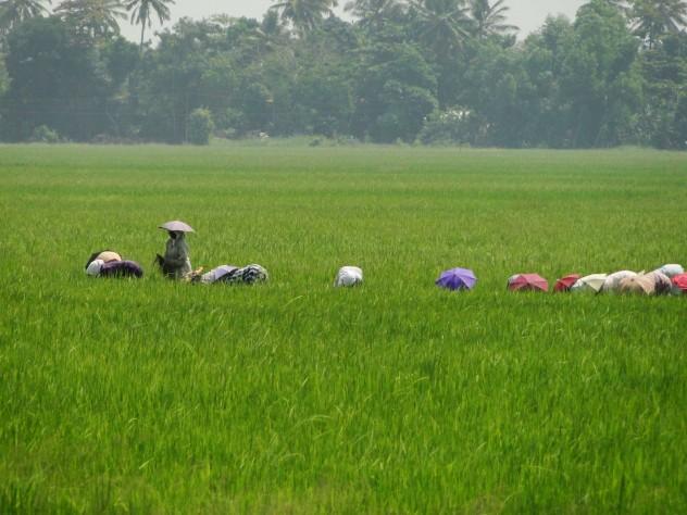 Indien_Sonnenschirme