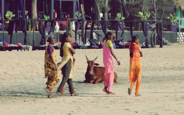 Indien Strand Beach Kuh Agonda Goa