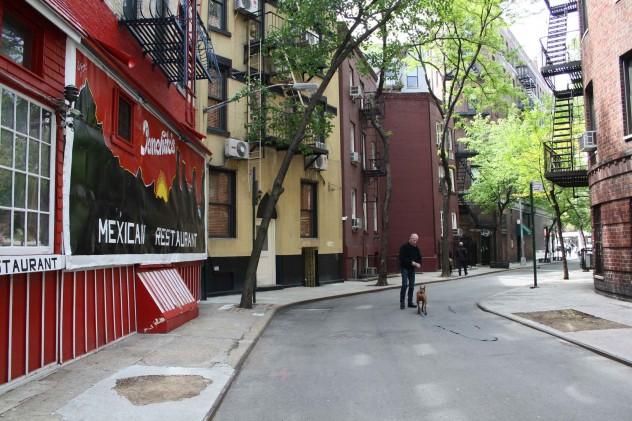 New York curved Street Dog