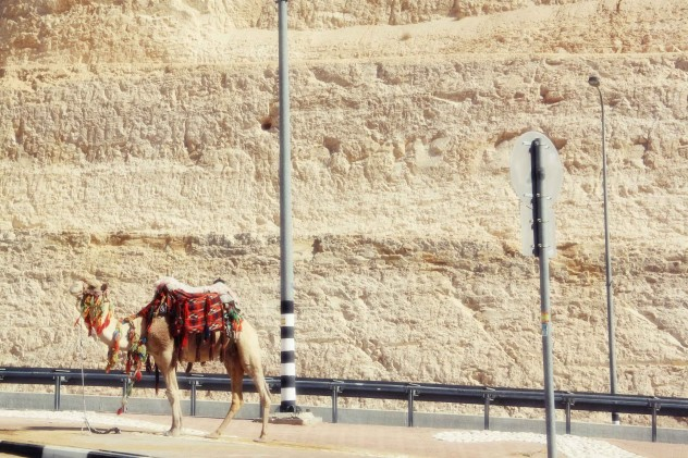 Israel Kamel