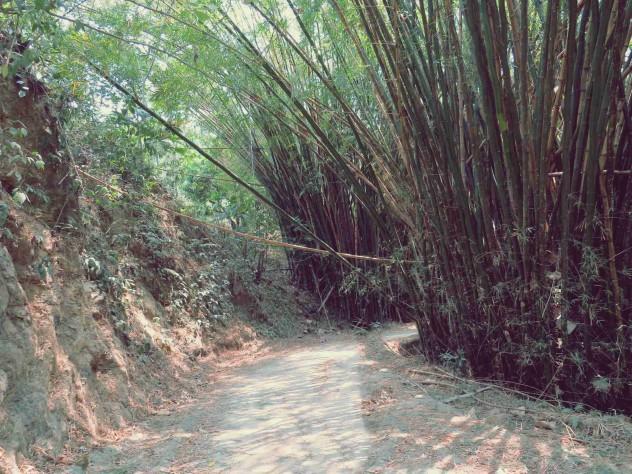 Roadtrippin Kolumbien Minca Bambus