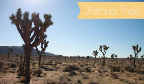 joshua tree teaser new