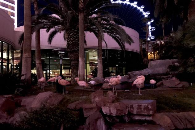 flamingos hotel flamingo las vegas